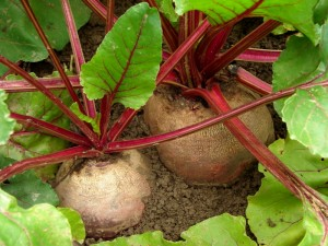 3977366-beetroots